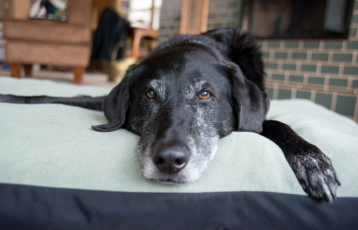 Individual pet reactions to NSAIDs can vary