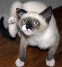 Is your cat constantly scratching?