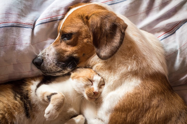 Dogs And Cats With Epilepsy Petmeds Pet Health Blog