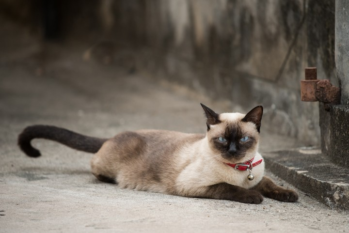 Outdoor cats face more risk for injuries and accidents