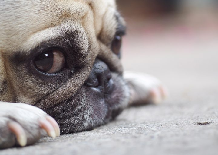 Noticing spots of urine where your pet rests is a sign of incontinence