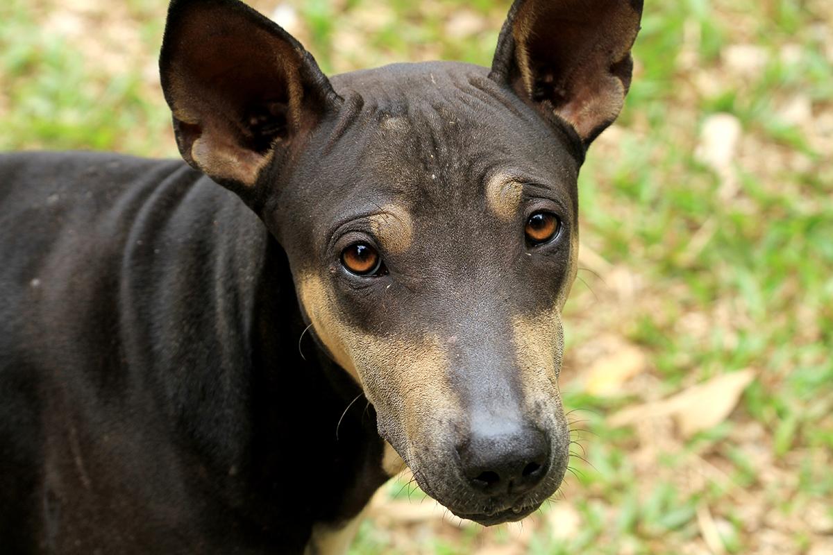 Does My Pet Have Mange Petmeds 174 Pet Health Blog