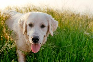 K9 Advantix: A simple way to protect your dog from fleas & ticks