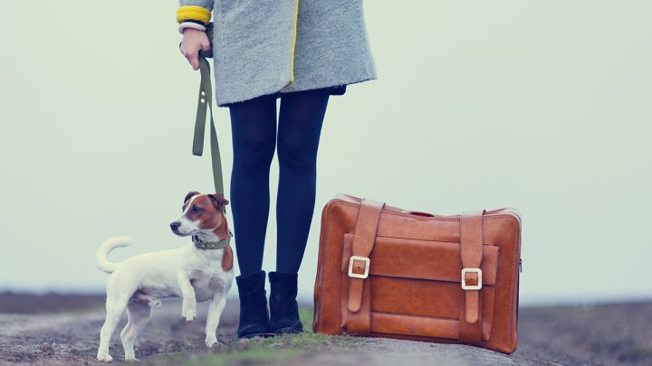 Take steps to ease your pet's travel anxiety