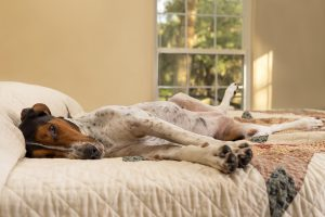 Using cortisone to help itchy dogs and cats