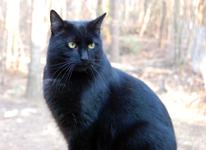 cat-sniffles