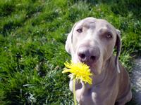 reverse-sneezing-dog