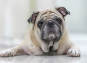 Understanding Bumps and Cysts on Pet's Skin