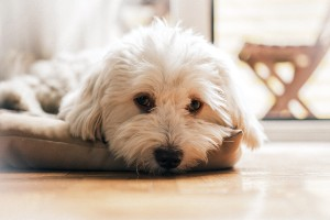 PetMeds: Managing Eye Discharge (Mucus) in Dogs and Cats