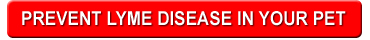 CTA-button-lymedisease