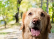 My dog tested positive for Lyme disease