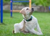 Flea medication not working on pets