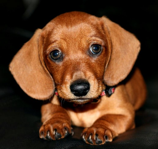 Picking the best age to adopt a new puppy or kitten.