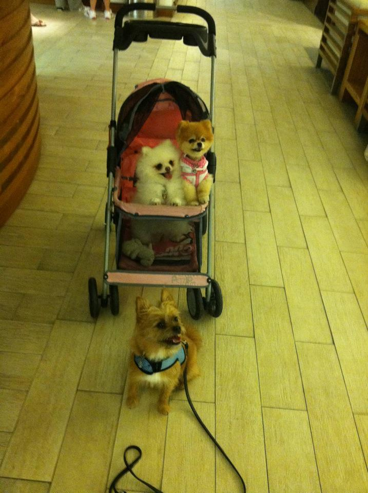 Bella meets her friend Chewie Mutt at the hotel.