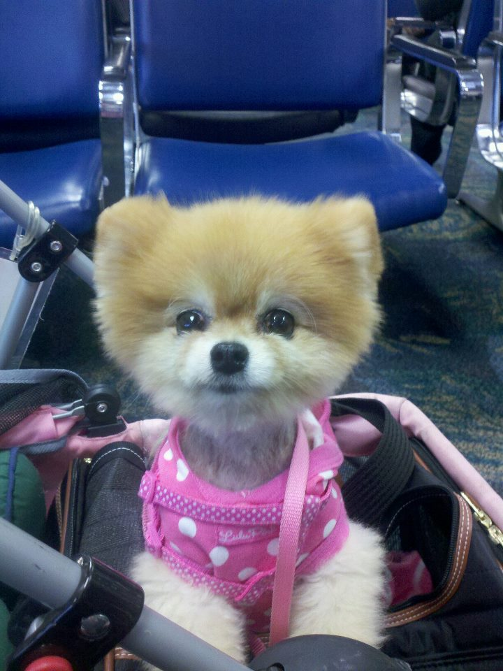 Bella travels in her stroller at the airport.