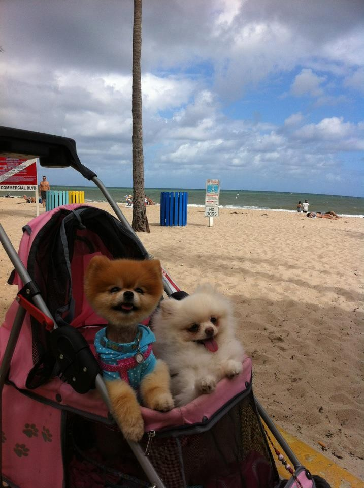 No dogs were allowed at the beach.