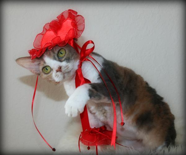how to talk like cat valentine