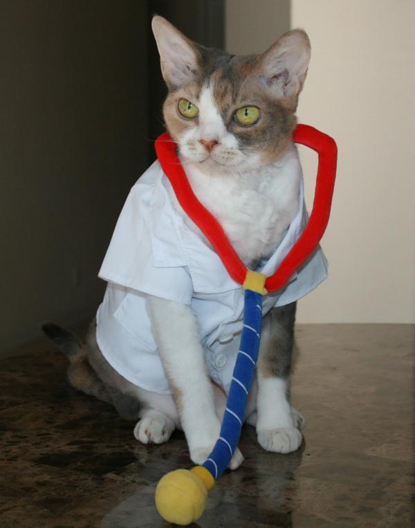 Daisy The Curly Cat Studies Medicine Petmeds 174 Pet Health