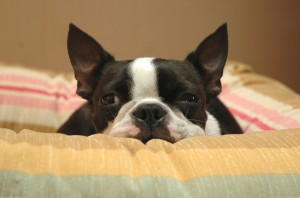Signs your pet may have enteritis include vomiting, diarrhea and loss of appetite