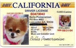 Bella is proud to have her own driver's license