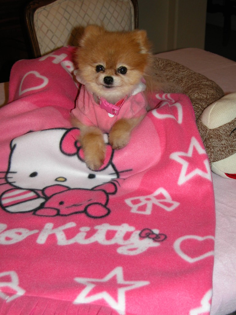 Bella loves her very own Hello Kitty blankie