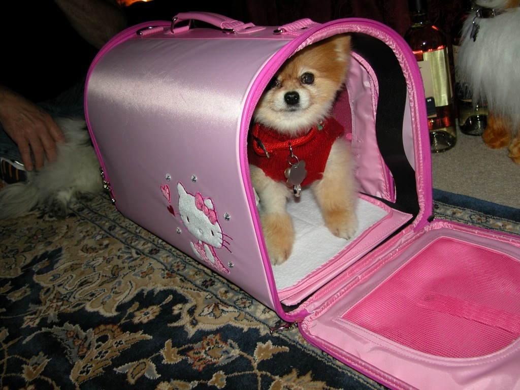 Bella even has a Hello Kitty carrier
