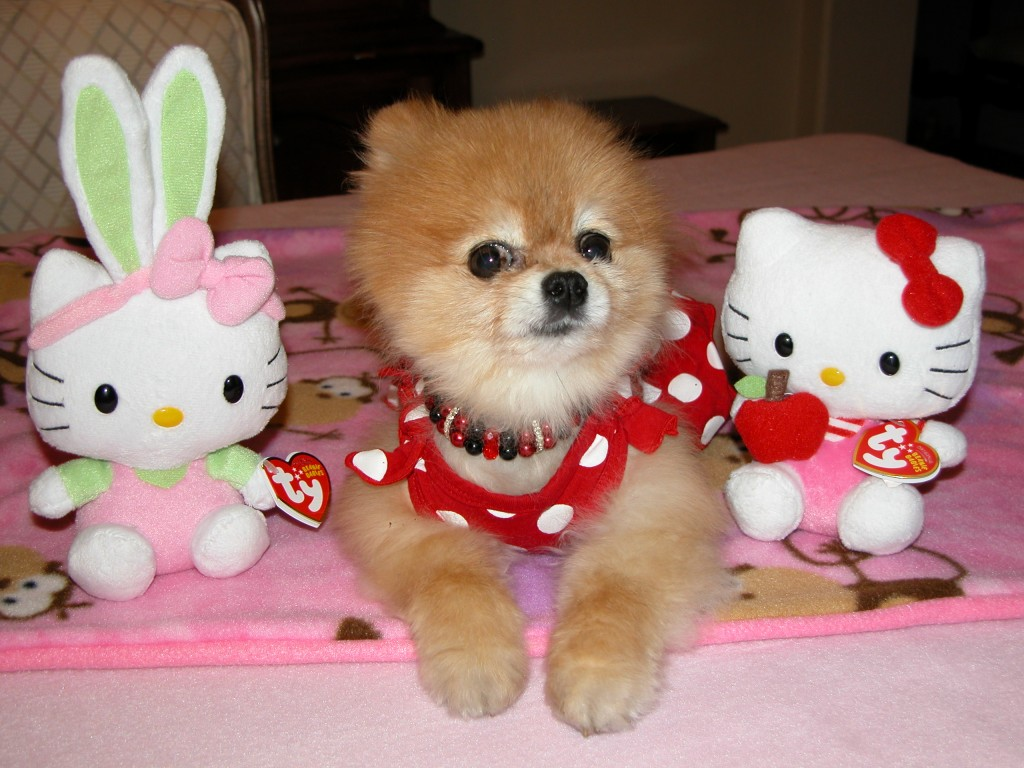 Bella poses with two of her favorite Hello Kitty stuffies