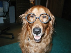 Every pet should have a complete eye exam at least once yearly.