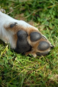 The removal of a dog's dewclaw is a controversial topic