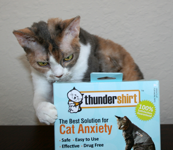 "The Thundershirt is ""The Best Solution for Cat Anxiety"""