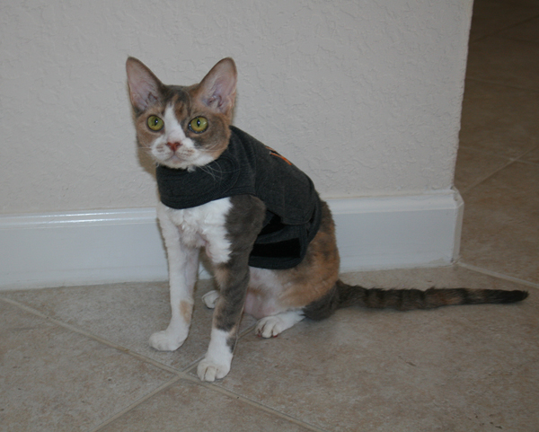 With her new Thundershirt, Daisy is prepared to deal with Harley