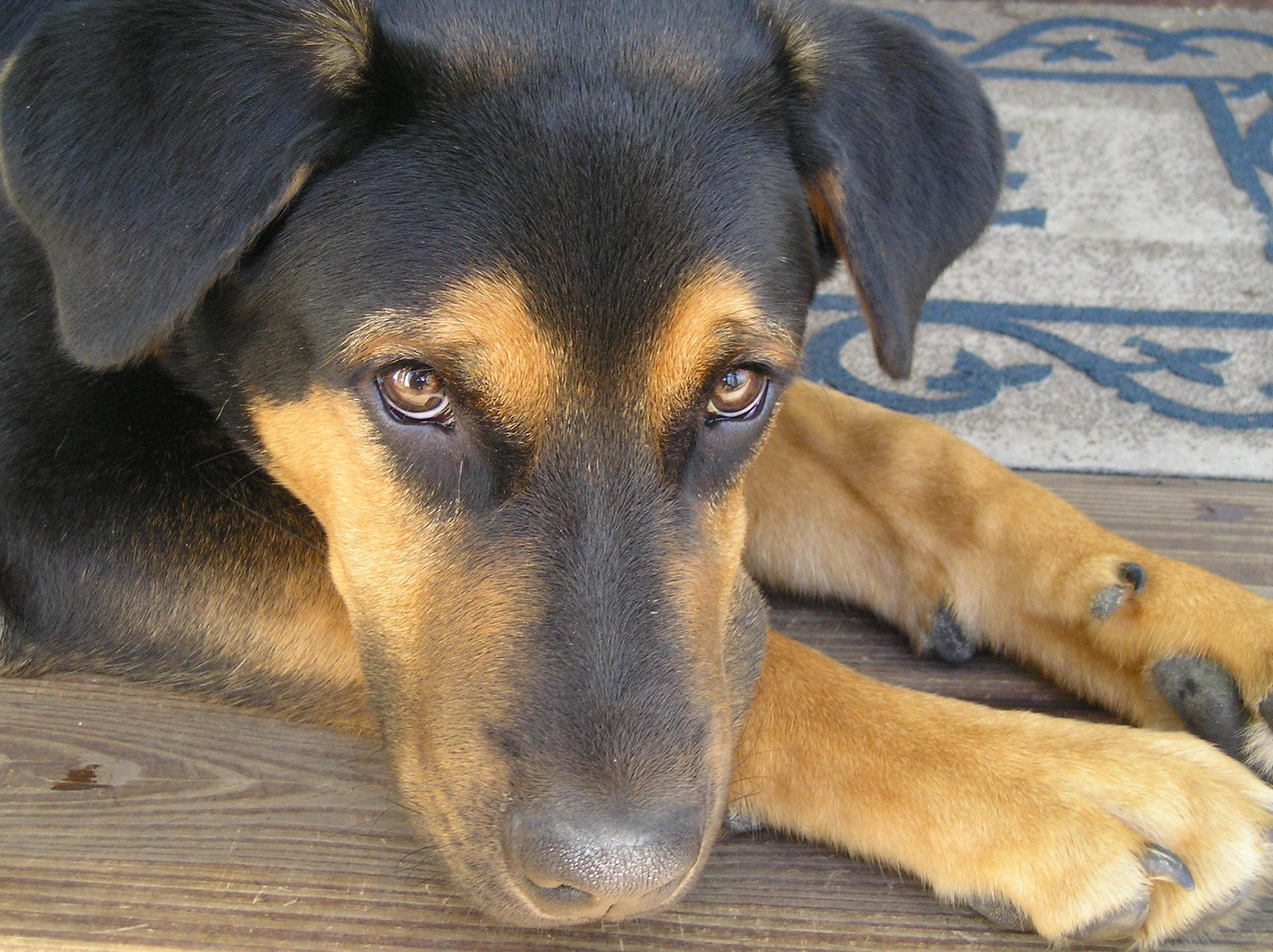 Yellowing Of Eyes In Dogs