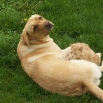 Most pets show no signs of infection with West Nile virus