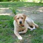 Snake encounters can be quite common in dogs and cats during the warmer months