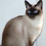 The cause of feline hyperesthesia is most commonly not known
