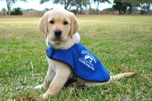 how to be a guide dog trainer