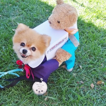 Bella won the prize for best small pooch!