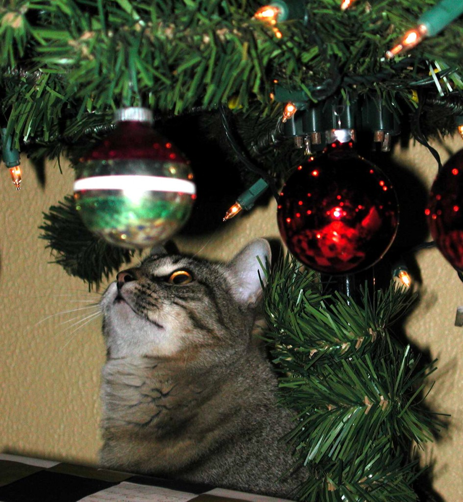 The Christmas tree is irresistible to most cats
