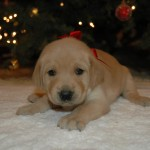 Learn how to start your new puppy or kitten on the right foot