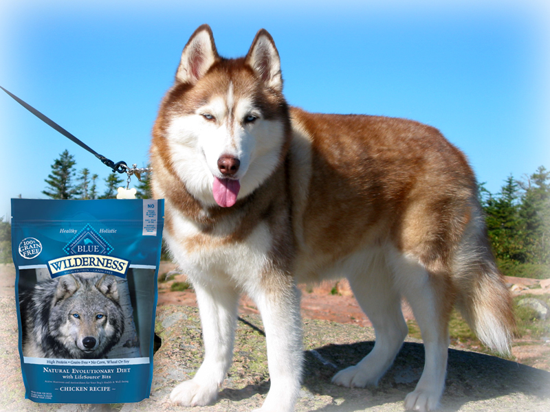 Blue Buffalo pet food is manufactured in the United States