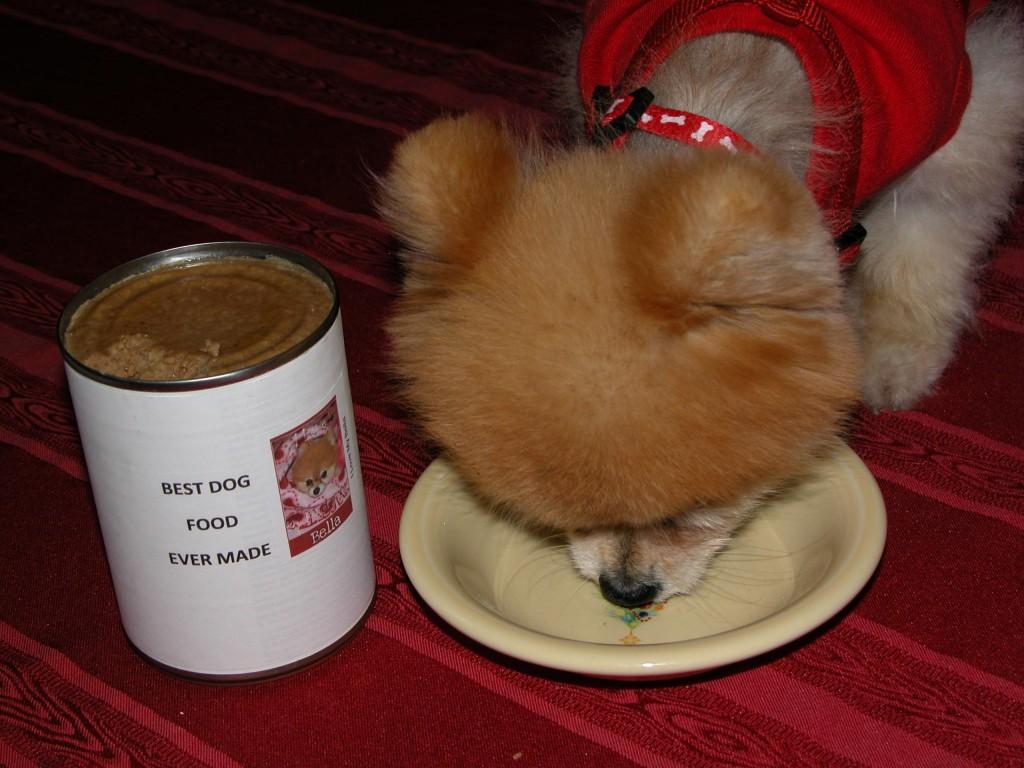 Dogs Keep Eating Bird Food