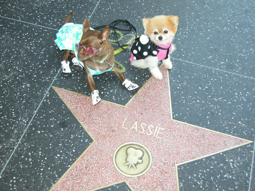 Lassie's star is found at 6368 Hollywood Blvd
