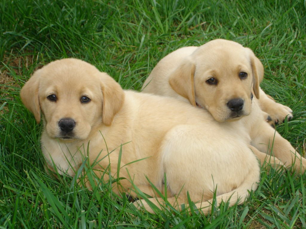 Canine distemper is a major cause of death in unvaccinated puppies