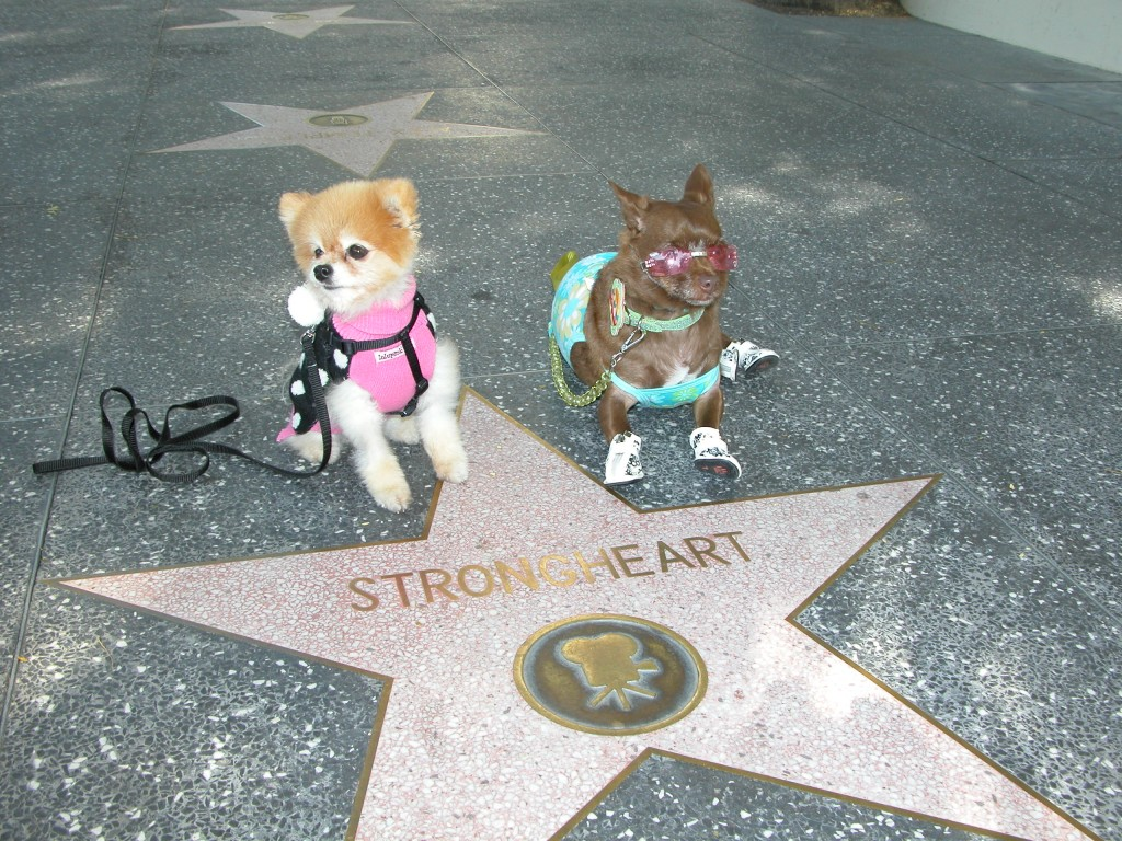 Strongheart was one of the earliest canine film stars