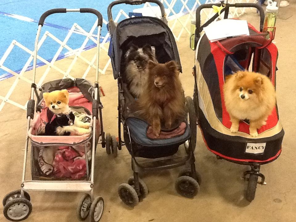 Bella with her friends Diva, TomTom and Fancy