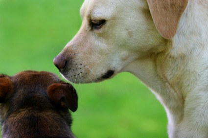 Dogs are able to distinguish dogs from other kinds of animals