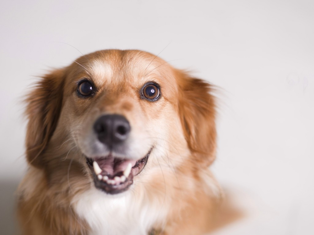 People are good at identifying a dog's emotions