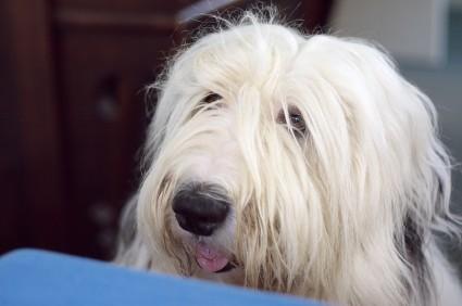 Keep Table Scraps As Trash Petmeds 174 Pet Health Blog