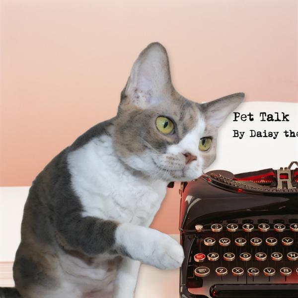 Daisy the Curly Cat shares some news