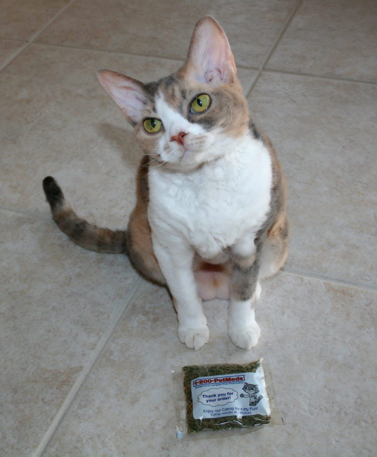 Daisy the Curly Cat with a package of complimentary PetMeds catnip